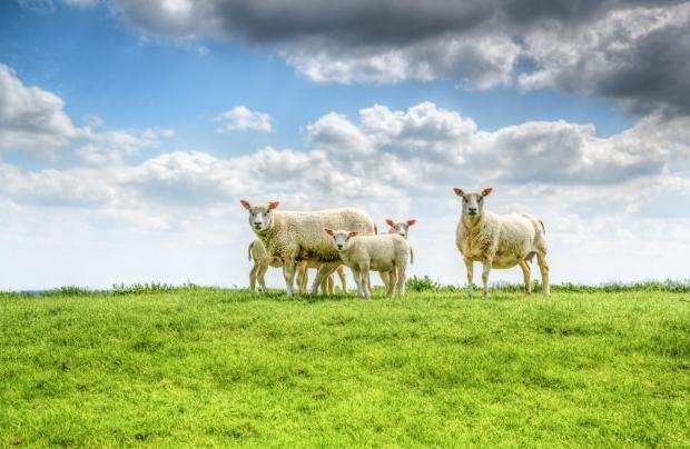 Podsjetnik za primarne poljoprivredne proizvođače u sektoru biljne proizvodnje i sektoru stočarstva