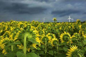 Produžen rok za prijavu na natječaj za obnovu poljoprivrednog zemljišta i proizvodnog potencijala