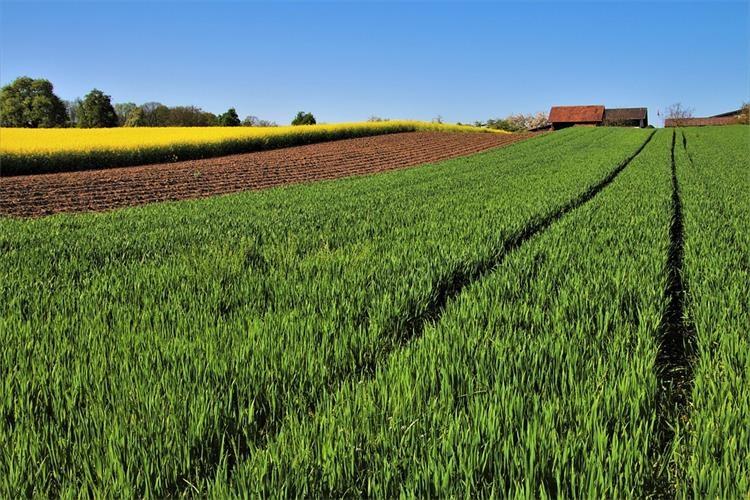 Objavljen je Pravilnik o izmjenama i dopunama Pravilnika o provedbi izravne potpore poljoprivredi i IAKS mjera ruralnog razvoja RH za 2020.