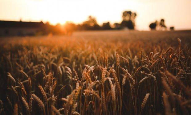 """Komentirajte nacrt """" Analize potencijala i razvoja poljoprivredne proizvodnje u Požeško-slavonskoj županiji"""".- pozivamo sve zainteresirane da se uključe u javnu raspravu"""